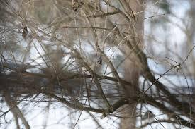 zf2 twig layout birding with a 135mm third party lens talk forum digital