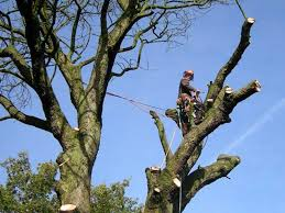 tree work crowther landscapes