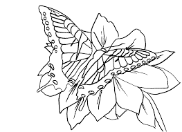 print u0026 download fairy coloring pages adults