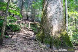 bear creek trail in north georgia