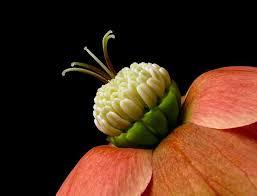453 best flower power images on pinterest flower power flowers