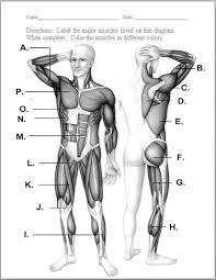 Human Anatomy Worksheet Human Muscle Labeling Worksheet Femoralnerve Com