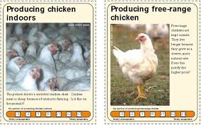 farm animals u0026 us full teachers pack compassion in world farming