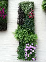 Vertical Gardens Miami - 12 best bromeliad living wall images on pinterest vertical