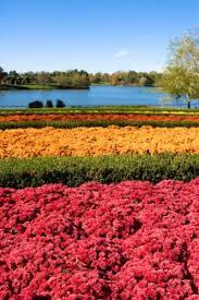 Botanical Gardens In Illinois Chicago Botanic Garden In Chicago Illinois