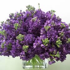 november seasonal flowers flowers in season november photo credit flowers and seasonal flowers