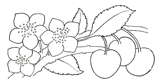 kids coloring pages flowers coloring pages clip art library