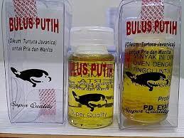 Minyak Bulus Asli Papua jual minyak bulus asli obat herbal khusus wanita kaskus