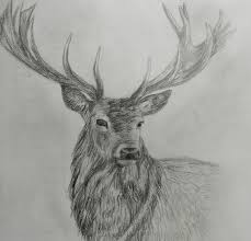 drawn buck charcoal drawing pencil and in color drawn buck