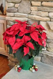 nurseries in atlanta homewood nursery 29 best christmas joy images on pinterest poinsettia christmas
