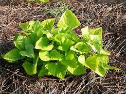 decorative plants for garden home design u0026 architecture cilif com