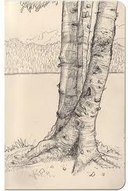 drawn tree tree bark pencil and in color drawn tree tree bark