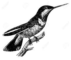picture of hummingbird stock photos u0026 pictures royalty free