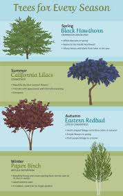 Good Backyard Trees by 436 Best Tall And Stately Images On Pinterest Nature Landscapes