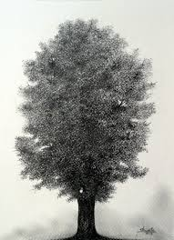 nutmeg hickory tree pencil drawing by aakritiarts on etsy 55 00