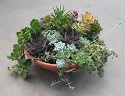 Large Succulent Planter Growth Care And Propagating Succulents And Other Cacti Tips And