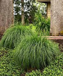 356 best jardinería ornamental grasses shrubs and combinations