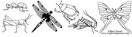 insect colouring pages funycoloring