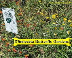 minnesota native plant society minnesota butterfly garden resources