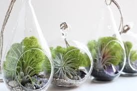 geode and pyrite air plant terrarium kit with chartreuse moss
