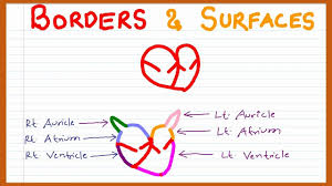 Borders Of The Heart Anatomy Mnemonic On Borders And Surfaces Of The Heart Youtube
