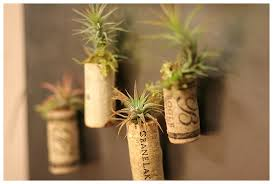 plant wedding favors airplant and succulent wedding favors calla