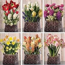 plant of the month club flowering plant bulb clubs new gifts of living beauty every month