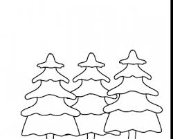pecan tree coloring page pecan tree coloring sheet coloring pages
