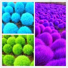 get cheap small ornamental shrubs aliexpress alibaba