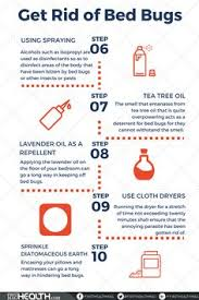 natural bed bug remedies home remedies to get rid of bed bugs awesomeness pinterest