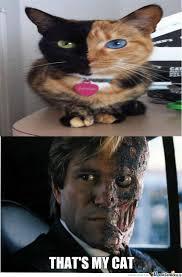 Two Face Meme - two face s cat by solaris132 meme center