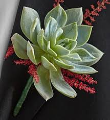 Wedding Boutonnieres Wedding Corsages Wedding Boutonniere 1800flowers Com