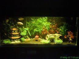 japanese aquarium hobbyist aquarium photos freshwater and saltwater fish tank set ups