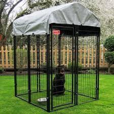 weimaraner u003d indoor house dog owyheestar weimaraner u0027s news