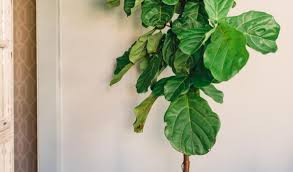 plant amazing artificial tree plants 4 foot outdoor artificial
