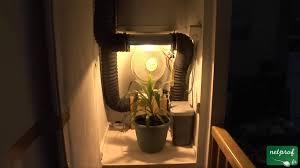 installation chambre de culture culture en intérieur sous lumière artificielle 4 le bruit