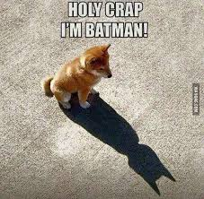Funny Puppy Memes - funniest memes 20 funny pictures topbestpics com