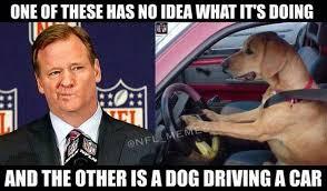 Dog Driving Meme - morons clueless commissioner roger goodell or dog driving