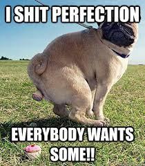 Funny Pug Memes - agreeable pug memes quickmeme