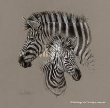 zebra pair charcoal original charcoal drawing wild wings