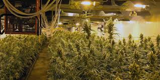 proper lights for growing weed create the best climate for marijuana grow room