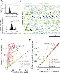 low noise encoding of active touch by layer 4 in the somatosensory