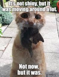 Christmas Cat Memes - christmas cat imgflip