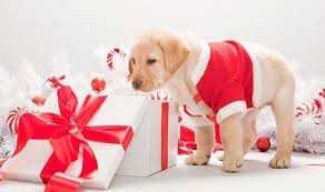 pet christmas christmas gifts for your pets dog crackers animal and