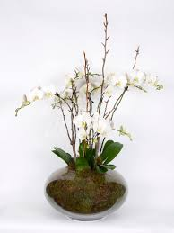 orchid plant send flowers that will last live orchid plant