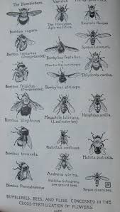 island bugs backyard and beyond
