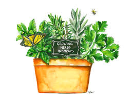 herbs indoors the right way to grow your herbs indoors