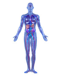 Picture Human Body Interactive Body