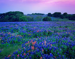 Places To Live In Austin Texas 154 Best Texas Hill Country Bluebonnets Images On Pinterest