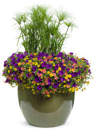 Plant Combination Ideas For Container Gardens - container garden recipe search proven winners